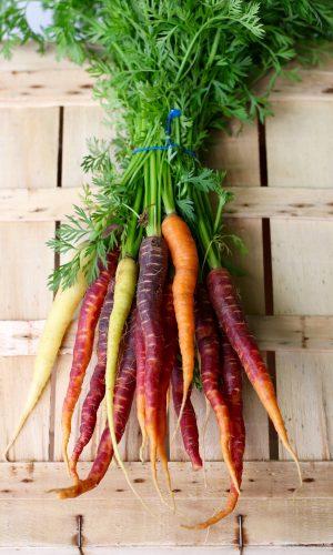 carrots-2608611_1920